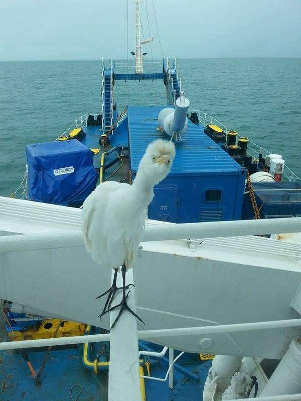 Sea Explorer Anna Kidor Sita